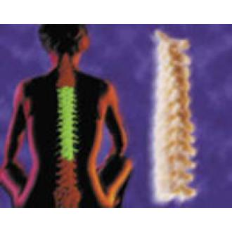 Система VERTEBRIS для грудного отдела в